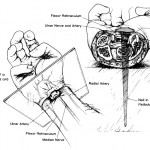 Anatomy of Nails in Crucifixion
